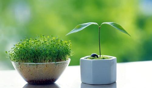 利用花卉植物净化室内甲醛环境应注意哪些事项呢?